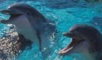 Дельфинарий Евпатория